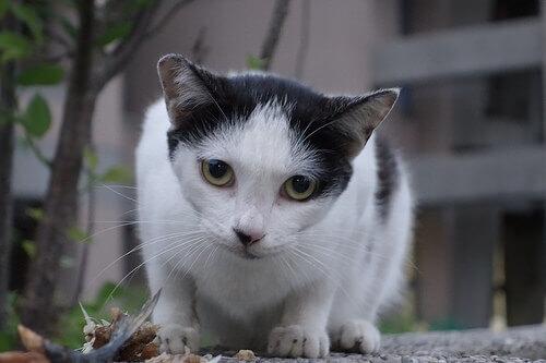 Comportamentos estranhos em gatos