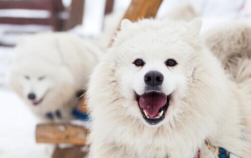Amazon garante que em uma década você poderá conversar com seu cão