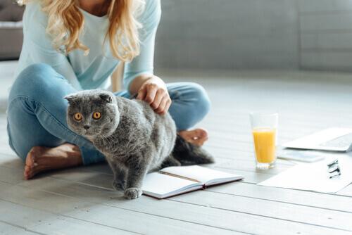 Mulher lendo e acariciando um gato