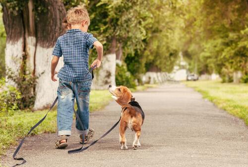 Menino levando cão para passear