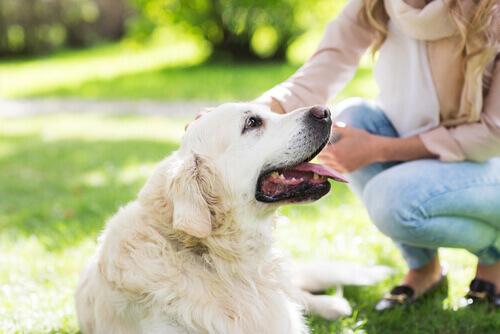 Cachorro branco recebendo carinho da dona
