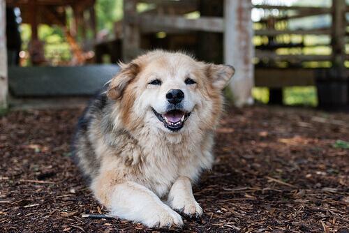 Displasia de quadril em cães: o que é e como tratar