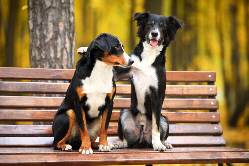 Dois cães amigos sentados no banco de um parque