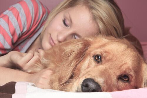 Dormir com o animal de estimação: prós e contras