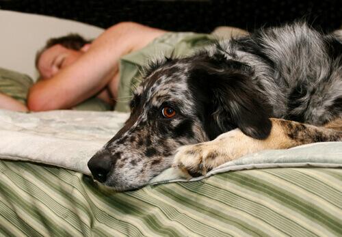 Homem dormindo com seu cão