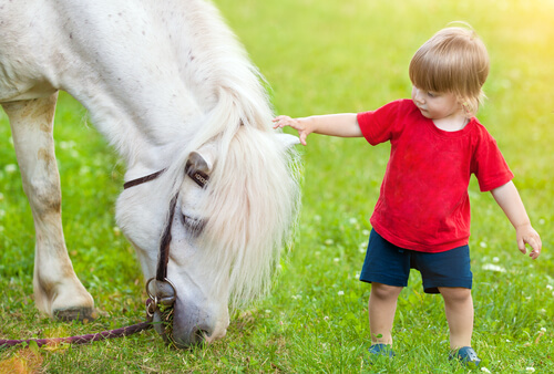 Menino e cavalo branco