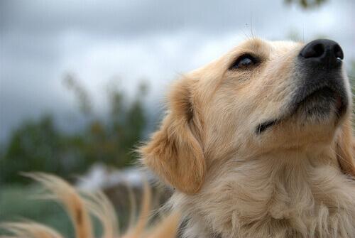 Como devo escovar a pelagem de um cão?