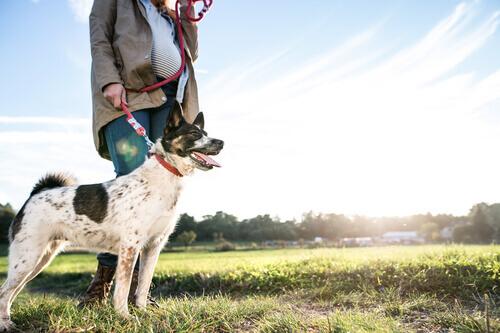 Cão com sua dona grávida passeando no campo