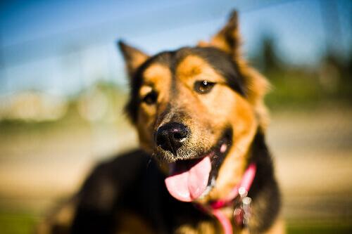 Focinho dos cães: tudo o que você precisa saber