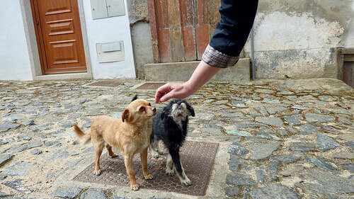 6 dicas para ganhar a confiança do seu cão