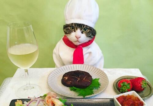 Gato japonês faz sucesso no Instagram