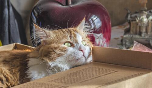 Faça com que a mudança de casa não seja um trauma para seu gato