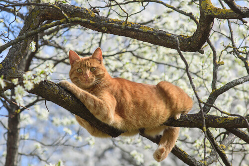 Conselhos para ajudar seu gato depois de uma queda