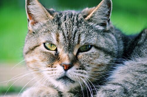 Só não gosta de gatos quem não os conhece