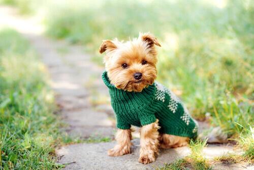 Nomes para cães de pequeno porte