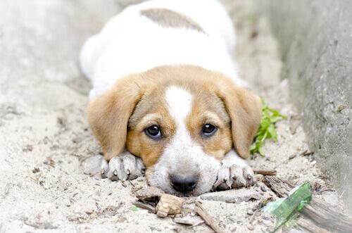 Filhote de cão vira-lata deitado na rua