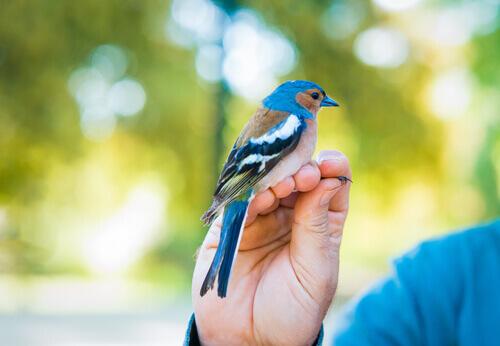 Pássaro na mão de um homem