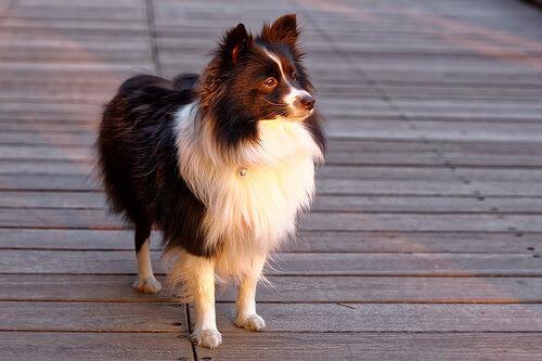 Qual é a personalidade do seu cachorro?