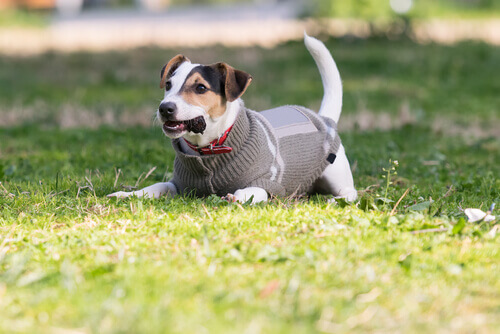 Prevenir o frio nos cães: cuidados e conselhos