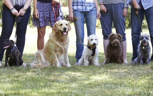 Cães com seus donos