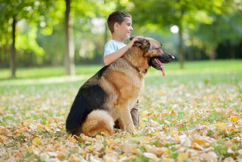 Quais são as raças de cachorro mais carinhosas?