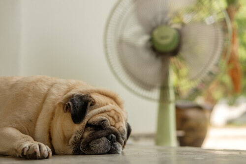 Cão se refrescando perto de um ventilador