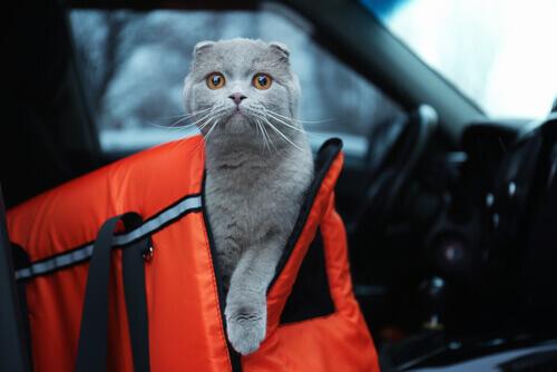 Precauções para viajar com o seu animal de carro