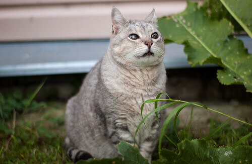 Doenças de gatos idosos