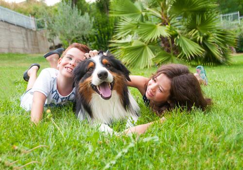 O melhor cão para seus filhos: pequeno ou grande