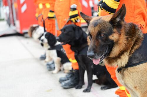 Os drones e os cães de resgate