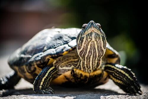 Tartarugas em perigo de extinção
