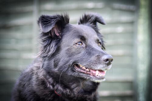 Como acalmar um cão irritado?