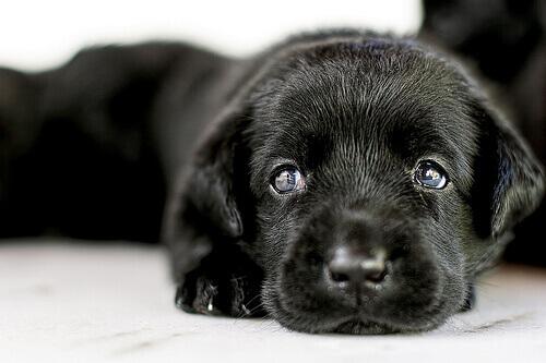 Adoção de cães: tudo o que se deve saber