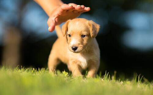 O que eu preciso de saber antes de adotar um filhote de cachorro?