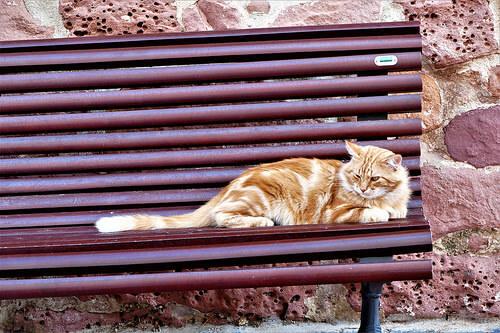 Como posso ajudar uma colônia de gatos de rua?