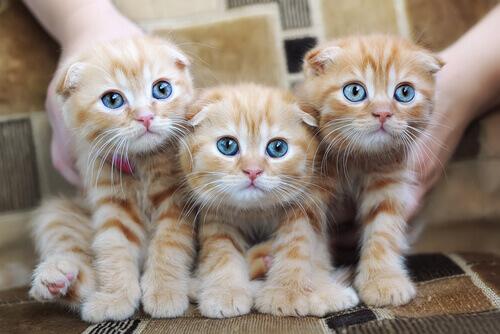 Alergia a gatos: causas, sintomas e prevenção