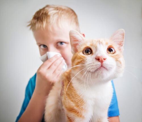 Menino com alergia a gatos