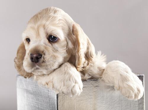 Filhote de cachorro numa caixa