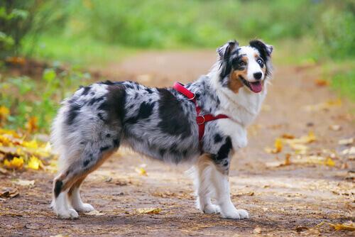 Cachorro com arnês