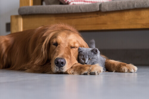 A audição em cães e gatos, um sexto sentido