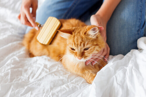 Como tratar as bolas de pelo nos gatos