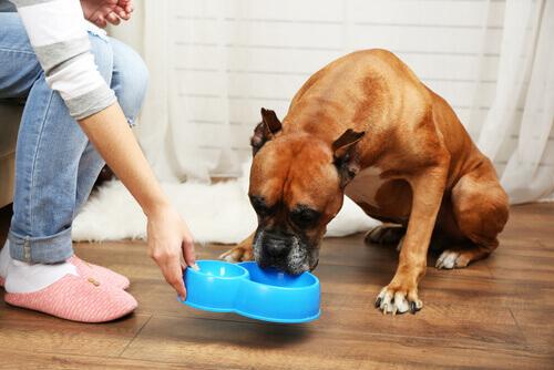 Cachorro idoso comendo