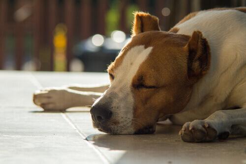 Cachorro vira-lata deitado no chão