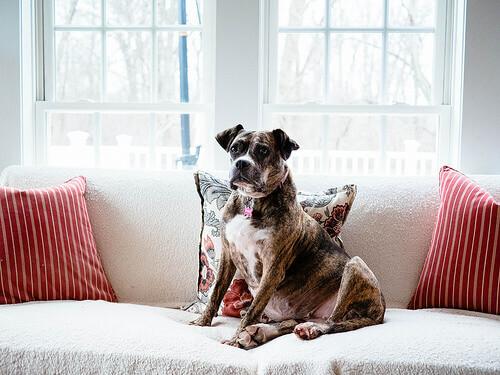 Conheça a origem do cão doméstico