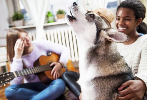 Os cachorros gostam de música?