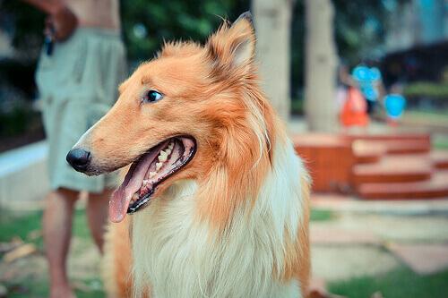 Como calcular a idade de um cão
