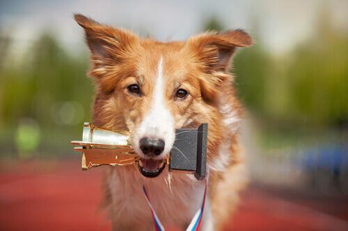 Cachorro com troféu na boca