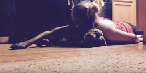 Colt, o cão treinado para ajudar sua dona