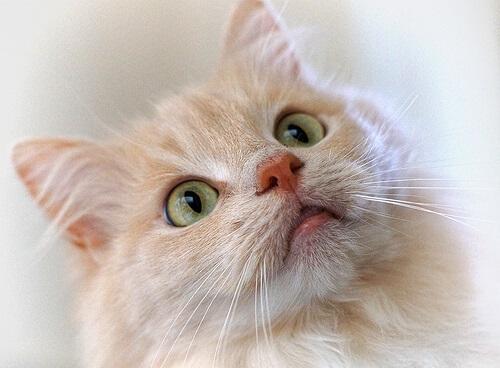 Treinamento de gatos com clicker