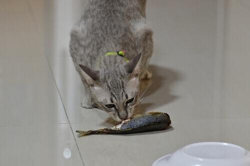 Seu pet pode comer peixe?